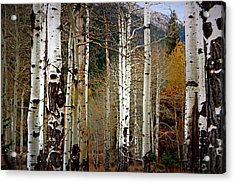 Acrylic Print featuring the photograph Aspen In The Rockies by Lynn Sprowl