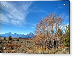 Acrylic Print featuring the photograph Aspen Last Stand  by David Andersen