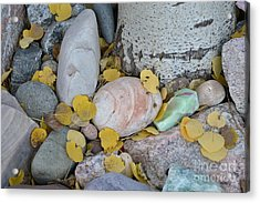 Aspen Leaves On The Rocks Acrylic Print