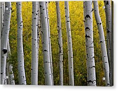 Aspen Light 3 Acrylic Print