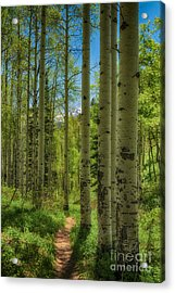 Aspen Lined Hiking Trail Hdr Acrylic Print by Mitch Johanson