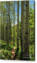 Aspen Lined Hiking Trail Acrylic Print by Mitch Johanson