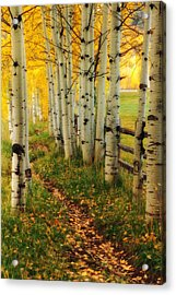 Acrylic Print featuring the photograph Aspen Path by Ronda Kimbrow