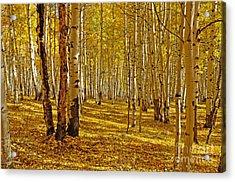 Aspen Sanctuary Acrylic Print