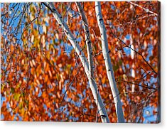 Acrylic Print featuring the photograph Aspen by Sebastian Musial