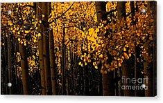 Aspen Woods Acrylic Print