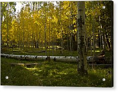 Acrylic Print featuring the photograph Aspens 4619 by Tom Kelly