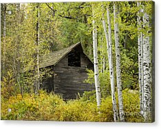Aspens And Barn Acrylic Print
