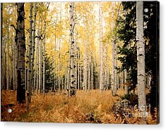 Acrylic Print featuring the photograph Aspens by Fred Wilson