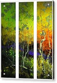 Aspens In Season Acrylic Print