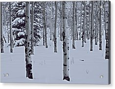 Acrylic Print featuring the photograph Aspens In The Snow by Kristal Kraft