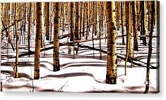Aspens In Winter Acrylic Print by Claudette Bujold-Poirier