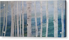 Aspens In Winter Acrylic Print by Jessie Nolan