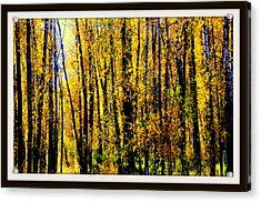 Aspens In Yellowstone National Park Acrylic Print