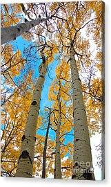 Acrylic Print featuring the photograph Aspens by Jeff Loh