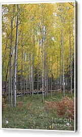 Acrylic Print featuring the photograph Aspen's Yellow Glow by Ruth Jolly