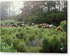 Assateague Herd Acrylic Print by Joann Renner