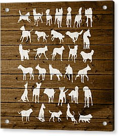 Assorted Dog Species Outline White Distressed Paint On Reclaimed Wood Planks Acrylic Print