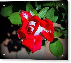 Assorted Flower 003 Acrylic Print