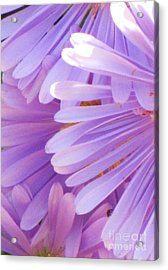 Acrylic Print featuring the photograph Aster Petals by Michele Penner