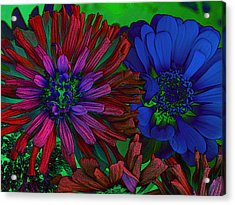 Asters Acrylic Print