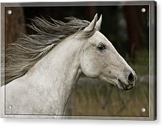 Acrylic Print featuring the photograph At A Full Gallop D7796 by Wes and Dotty Weber