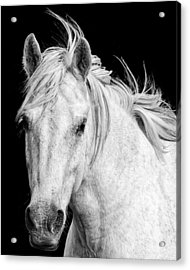 Acrylic Print featuring the photograph At Carmargue by Gigi Ebert