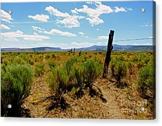 At Country  Acrylic Print by Tim Rice