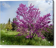 Acrylic Print featuring the photograph At Full Blossom by Uri Baruch