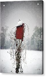 At Home In The Snow Acrylic Print
