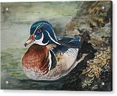 At Rest Acrylic Print by Betty-Anne McDonald