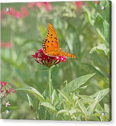 At Rest - Gulf Fritillary Butterfly Acrylic Print by Kim Hojnacki
