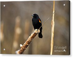 At Rest Acrylic Print by Mike  Dawson