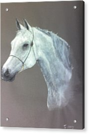 At Stud Acrylic Print by Stephen Thomson