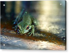 At Swim One Frog Acrylic Print by Laura Fasulo