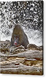 At The Edge Of The Waterfall Acrylic Print