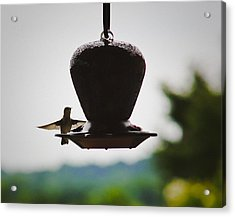 Acrylic Print featuring the photograph At The Feeder by Debra Crank