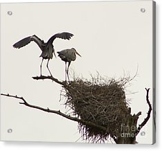 Acrylic Print featuring the photograph At The Rookery by Alice Mainville