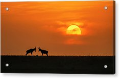 At The Sunset Acrylic Print