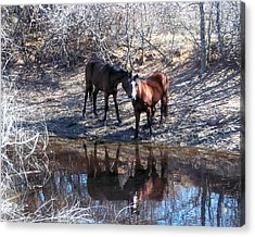 At The Water Hole Acrylic Print by Rosalie Klidies