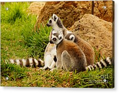 At The Zoo Acrylic Print by Nur Roy