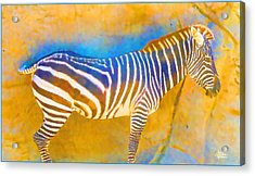 At The Zoo - Zebras Acrylic Print