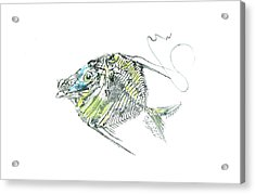 Atlantic Lookdown Fish Against White Background Acrylic Print by Nancy Gorr