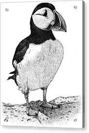 Atlantic Puffin Acrylic Print by Roger Hall