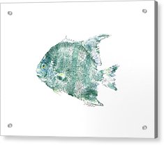 Atlantic Spadefish Acrylic Print by Nancy Gorr