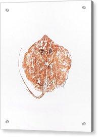 Atlantic Stingray Acrylic Print by Nancy Gorr