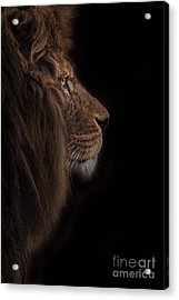 Atlas Burdened No More Acrylic Print by Ashley Vincent