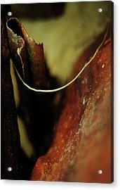 Atonement Acrylic Print by Rebecca Sherman