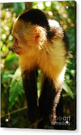 Attentive Acrylic Print by Susan Hernandez