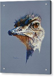 Attitude Aftican Ostrich Acrylic Print by Mary Dove